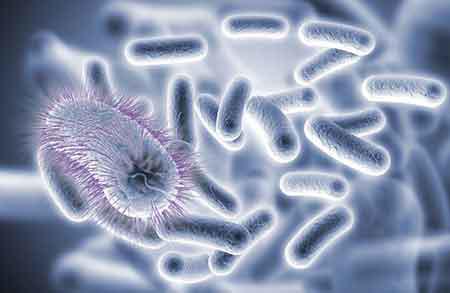 分类图片 肠道微生态